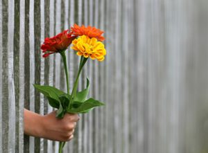 pictures of flowers through a fence
